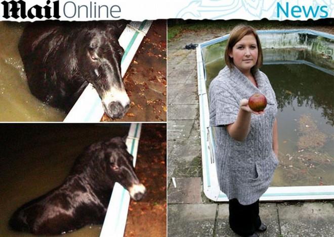 O pônei Fat Boy, preso na piscina, e sua dona, Sarah Penhaligon, com a prova do crime   Reprodução/Daily Mail