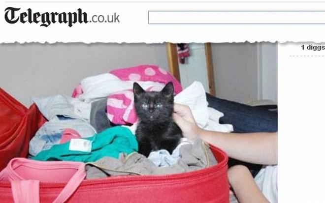 Viagem da Inglaterra à Holanda atrasou e Beauty ficou 21 horas dentro da mala | Reprodução / Telegraph