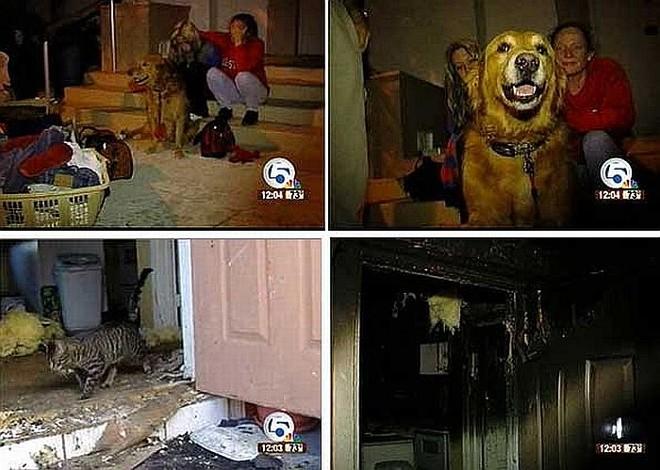 Latidos de Bubba acordaram toda a vizinhança. Gato foi flagrado circulando entre os escombros | Reprodução/WPTV.com