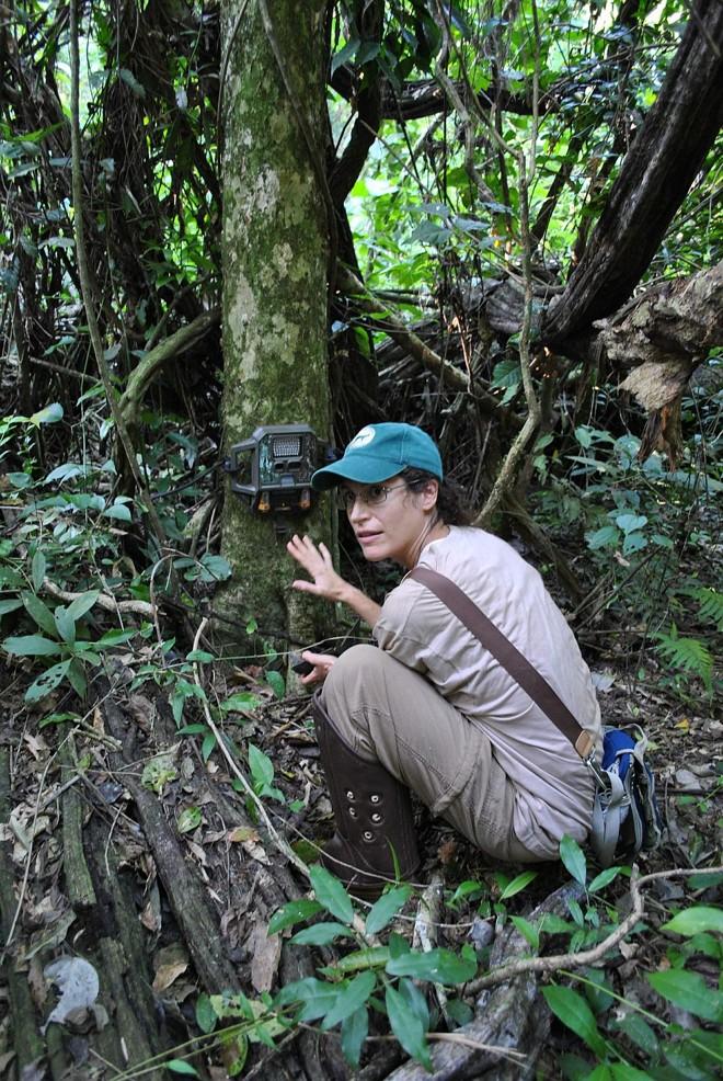 A bióloga Anne-Sophie confere a armadilha fotográfica, que é acionada pelo calor e pelo movimento | Cristhian Rizzi/ Gazeta do Povo