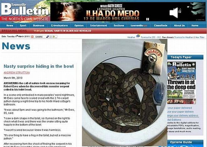 Cobra não se manifestou mesmo depois que ser incomodada por dono da casa | Reprodução/Townsville Bulletin
