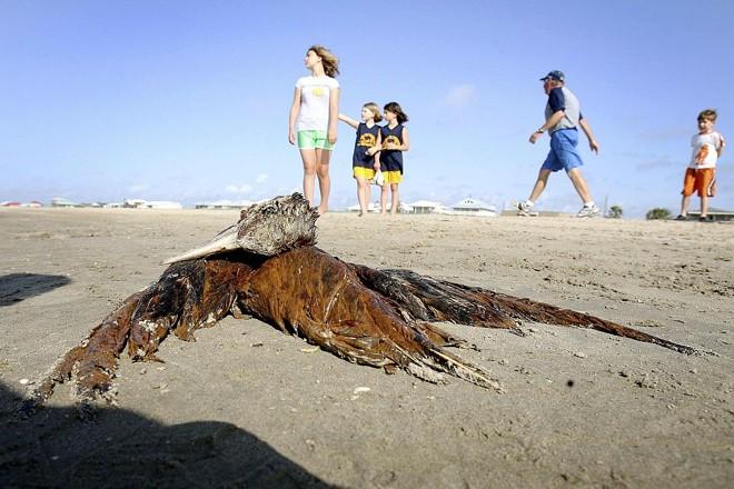 Animais morrem cobertos pelo óleo na costa dos Estados Unidos | Reuters