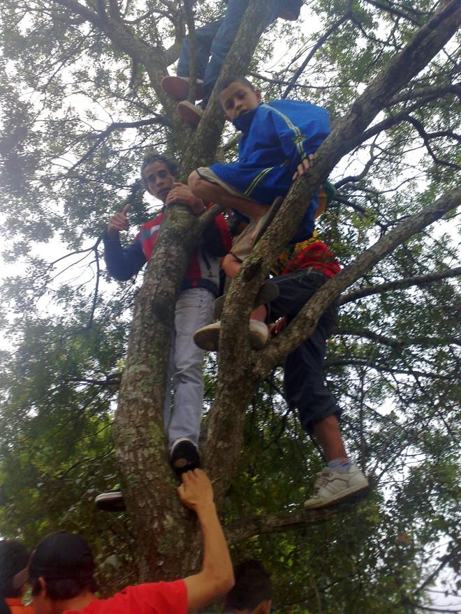 Crianças tentam ver ídolos de cima de uma árvore | Marcos Xavier Vicente / Gazeta do Povo