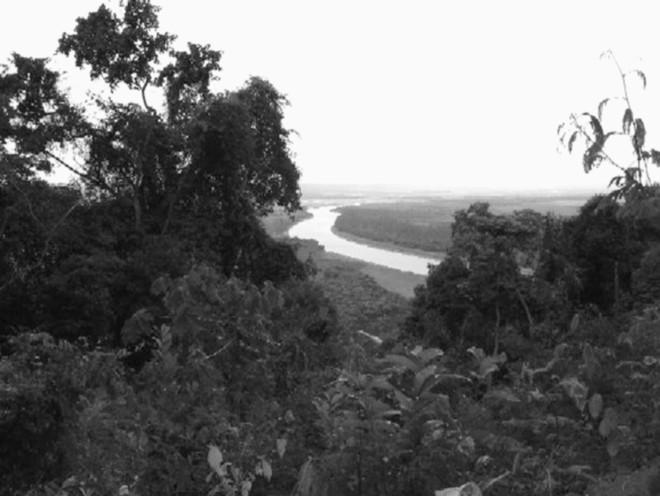 Seringais da Região Amazônica: 70 mil sementes foram retiradas do local e levadas para produzir borracha nas colônias inglesas |
