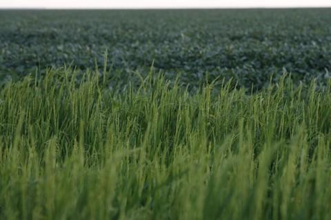 Safra de arroz e soja | Jonathan Campos / Agência de Notícias Gazeta do Povo