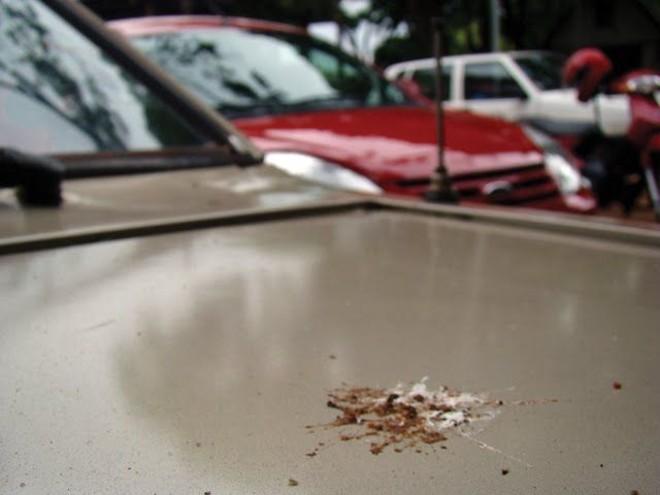 O ácido úrico das fezes de passarinho é um dos maiores inimigos da pintura do carro |
