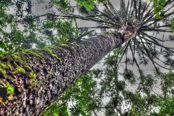 Dos 36 mil metros quadrados da propriedade, aproximadamente 30 mil são compostos por floresta de Araucária | Divulgação/Terezinha Vareschi/Apave