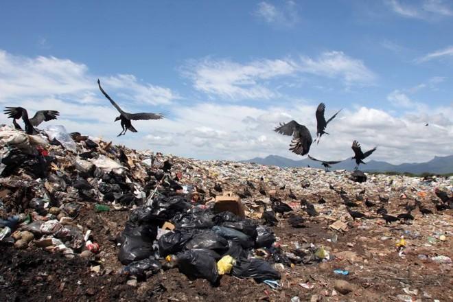 Conforme levantamento, a quantidade de criadouros em pneus e vasos de plantas é menor do que nos depósitos de lixo do estado, o que mostra a ligação entre questões ambientais e de saúde | Walter Alves/ Gazeta do Povo