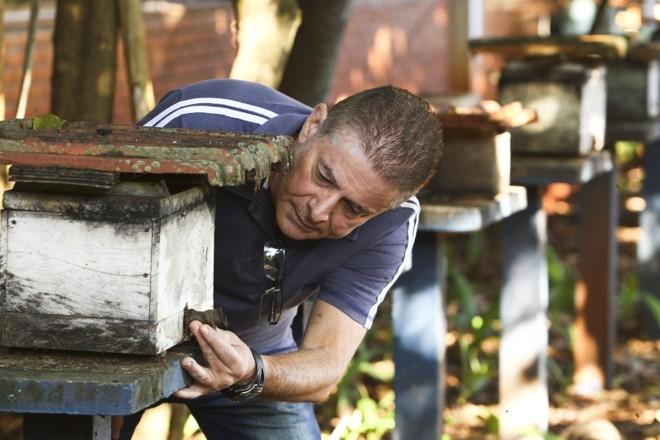 Professor Oilton Macieira, da UEL: algumas espécies de abelha já desapareceram   Roberto Custódio/ Jornal de Londrina