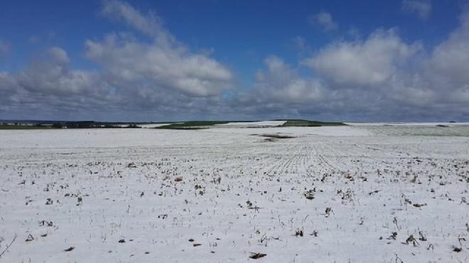 Neve cobriu de branco os campos de Guarapuava. Como maior parte da cevada estava em fase inicial de desenvolvimento, expectativa de alta produtividade se mantém | Larissa Wilk / Divulgaa§a£o