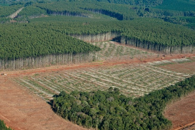 Área reflorestada pela Klabin em Telêmaco Borba | Henry Milleo/Gazeta do Povo