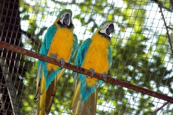 Cerca de 300 animais vivem no bosque e contam com atendimento de biólogos e veterinários   Prefeitura de Apucarana/Divulgação