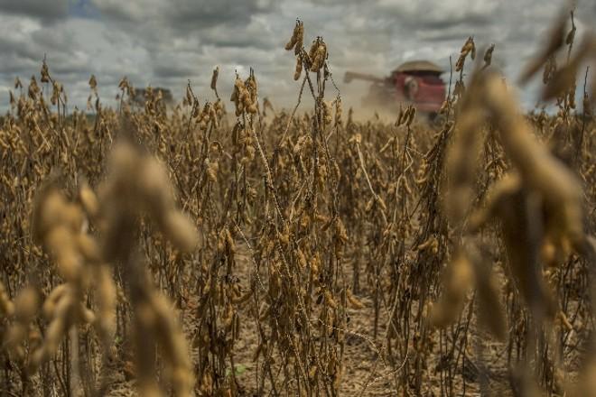 Com produção avaliada em mais de R$ 90 em 2013, lavouras de soja do Brasil sustentam superávit na balança comercial, mas põe setor na mira da tributação | Marcelo Andrade/gazeta Do Povo