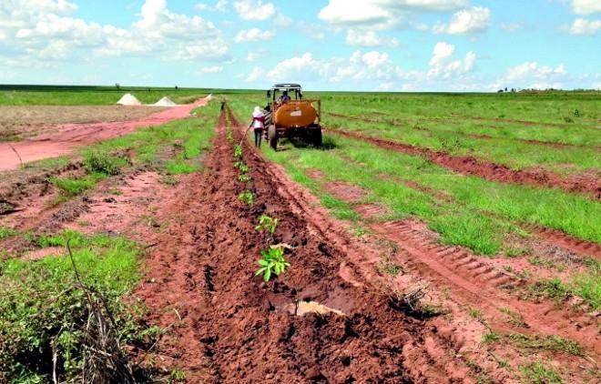 Investimento para formação da floresta é de R$ 5 mil por hectare | Roga©rio Recco/gazeta Do Povo
