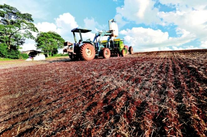Mesmo com queda nos preços dos grãos, estratégia dos agricultores é plantar soja antecipada para aproveitar janela do milho no inverno. | Cesar Machado/gazeta Do Povo