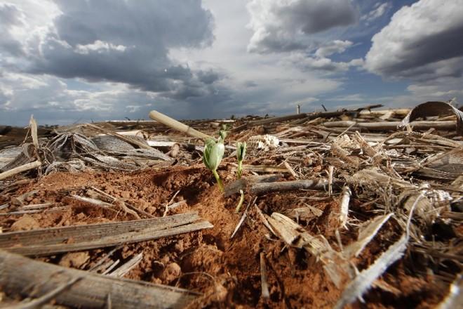 Plantio direto é usado em 80% das lavouras de grãos, em mais de 30 milhões de hectares | Jonathan Campos/Gazeta do Povo