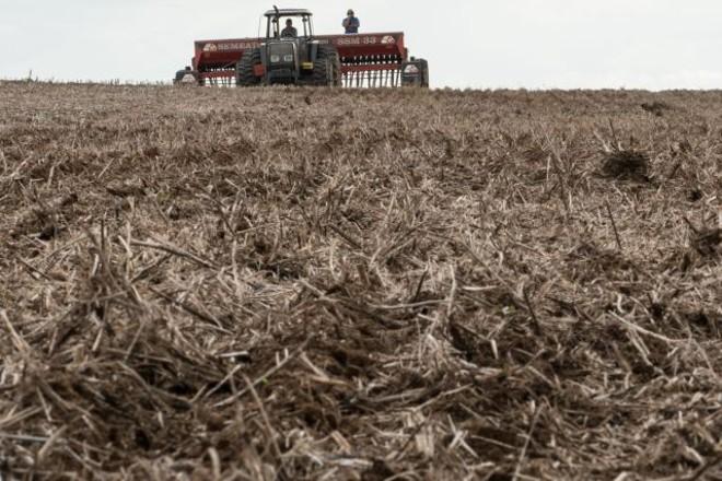 No Paraná plantio de milho corre solto. Sementes de soja devem ganhar o solo com intensidade mais para o fim do mês. | Henry Milla©o/ Gazeta Do Povo