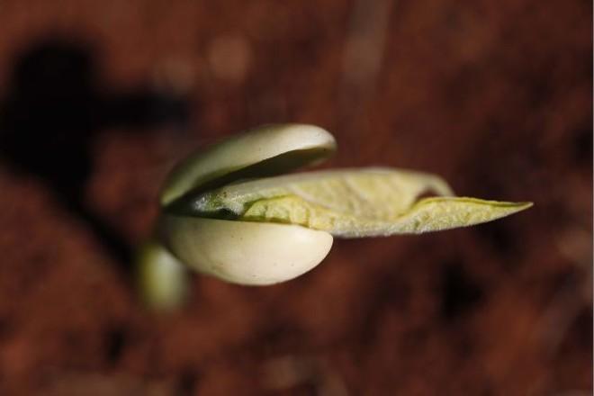 Plantio da safra das águas de 2014/15 começa em agosto, com previsão de recuo  na produção | Jonathan Campos/gazeta Do Povo
