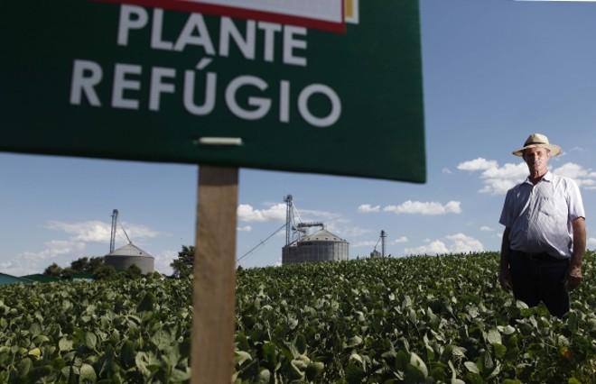Indústria faz campanha nas próprias lavouras para preservar soja Bt   Jonathan Campos/gazeta Do Povo