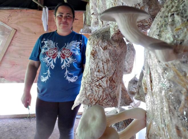 Laudemira Maria Krauczuk mostra os pacotes de onde nascem os cogumelos. | Morgani Guzzo / Gazeta do Povo