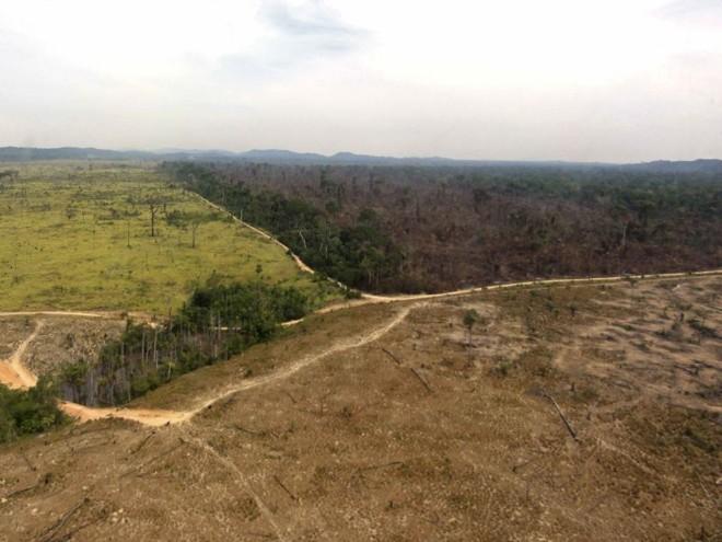 O desmatamento na Amazônia prejudica o clima no planeta e infla os indicadores de emissões brasileiras | Handout/Reuters