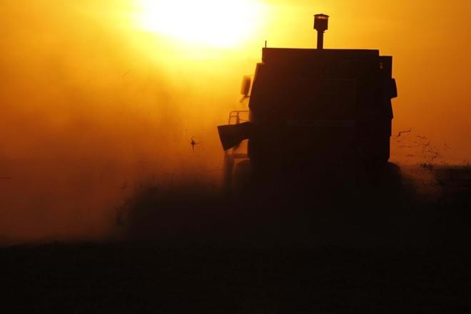 Safra gigante de soja põe Argentina contra o mercado   Jonathan Campos / Gazeta Do Povo