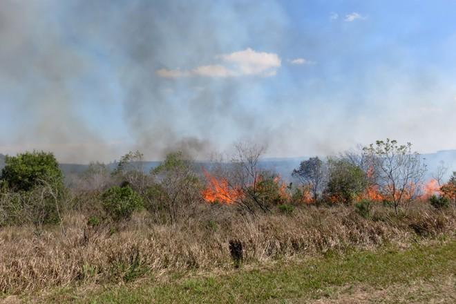 A queimada serve para extinguir as espécies invasoras e recuperar a vegetação típica dos campos gerais | IAP/Divulgação