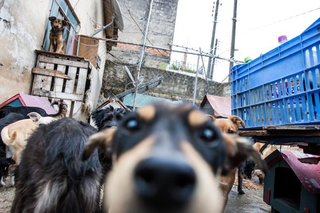 Local vai receber cães, gatos e cavalos em situação de risco nas ruas, prestar o primeiro atendimento e encaminhar o animal para adoção. | Brunno Covello/Gazeta do Povo/Arquivo