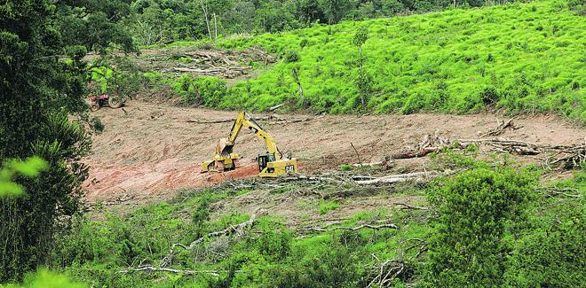 Os donos de pequenas propriedades  (até 70 campos de futebol) que desmataram até 2008 não precisarão restaurar a reserva legal . | Henry Milléo/Gazeta do Povo