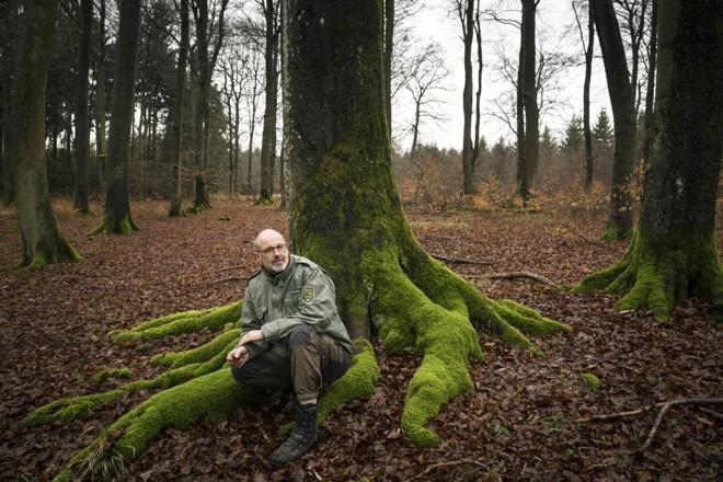 Peter Wohlleben  nas florestas de Hummel, onde realiza seus estudos | GORDON WELTERS/NYT