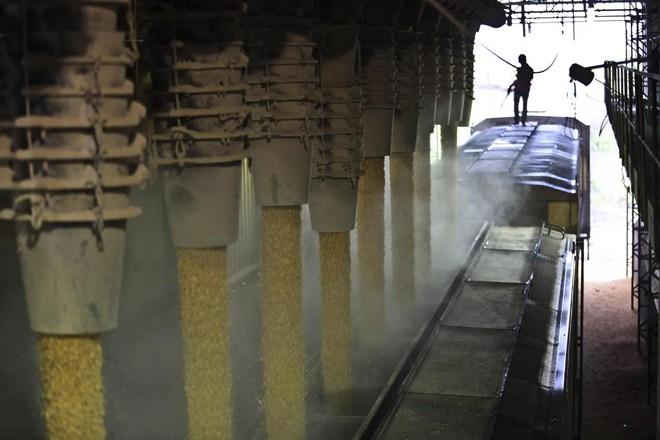 Estado ainda tem milhares de sacas de milho para escoar, visando liberar espaço para chegada da soja. | Jonathan Campos/Gazeta do Povo