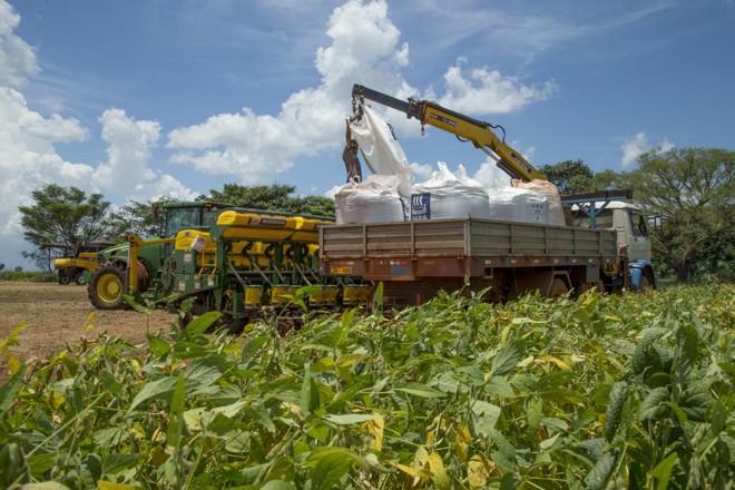 Produtos estão usando as sementes que encontram no mercado, muitas vezes sem a qualidade ideal. | Hugo Harada/Gazeta do Povo
