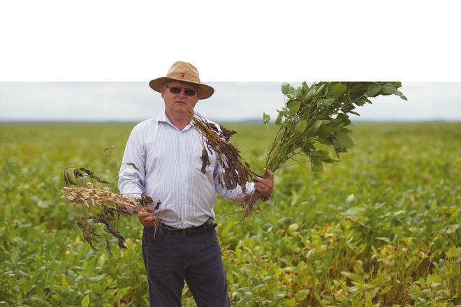 Soja com perda total, em áreas de replantio e em áreas de cultivo tardio. Aristeu Pellenz exibe o drama da safra em três estágios na região Oeste da Bahia. |