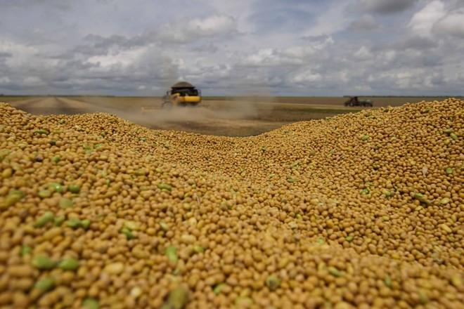 O balanço entre área e produtividade se repete no Paraná, segundo maior produtor da oleaginosa. | JONATHAN CAMPOS/GAZETA DO POVO