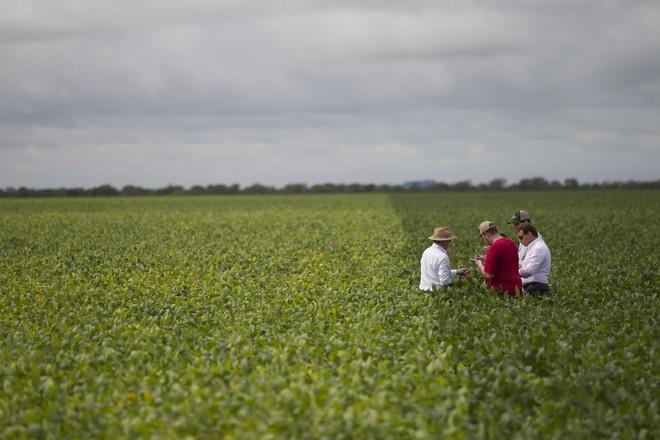 Faltou chuva no período de desenvolvimento das plantas e os grãos de soja não encheram como esperado nas lavouras do Matopiba. | JONATHAN CAMPOS/GAZETA DO POVO
