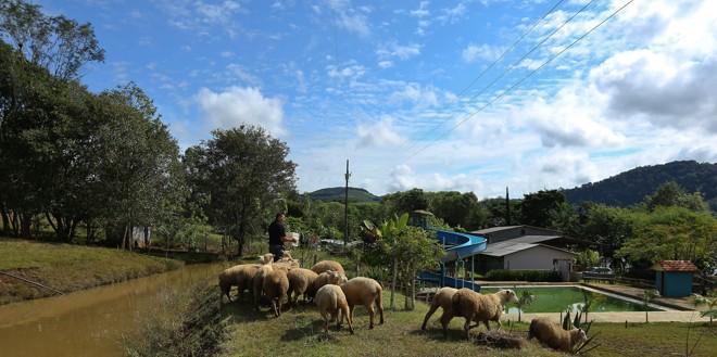 O turismo rural foi a saída para manter a renda da família D'Agostini no Recanto do Repolho.   Giuliano Gomes/Emater
