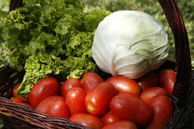 Além do tomateiro, serão realizadas ações para desenvolver outras culturas como cebola e aipim | Henry Milleo/Gazeta