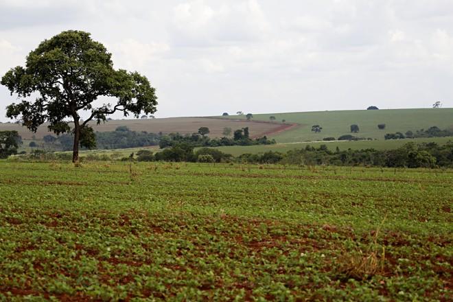 Goiás chama a atenção pelas belas paisagens de lavouras entre as cidades, na região de Rio Verde | Felipe Rosa/TRIBUNA DO PARANA