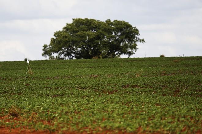 A Expedição Safra encontrou lavouras em bom desenvolvimento na região de Rio Verde, em Goiás. | Felipe Rosa/TRIBUNA DO PARANA