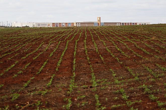 Rio Verde tem lavouras de soja até a beira da cidade. | Felipe Rosa/TRIBUNA DO PARANA