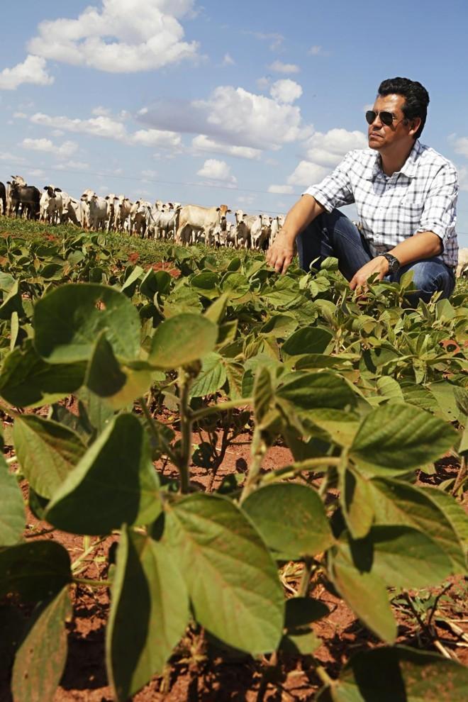 O movimento de integração lavoura-pecuária cresce muito no Centro-Oeste, especialmente no Mato Grosso do Sul. Na foto, Everaldo Reis, de Itaquiraí, que arrenda uma área de um pecuarista para produzir grãos.   Felipe Rosa /Gazeta do Povo