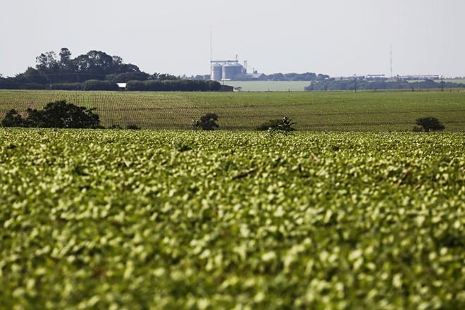 Quase todas as lavouras de soja da região de Rio Verde já estão semeadas | Felipe Rosa/TRIBUNA DO PARANA