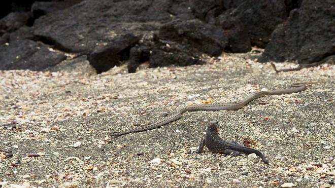 Iguana X Serpentes: a grande escapada. | Reprodução/