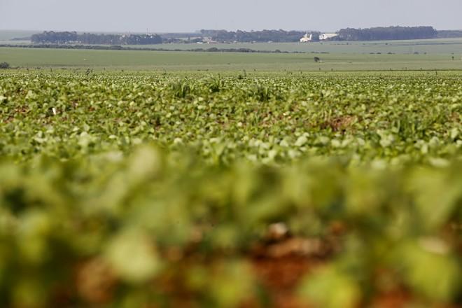 A região de RioVerde aposta que o clima deve ajudar a cultura da soja neste ciclo. | Felipe Rosa/TRIBUNA DO PARANA