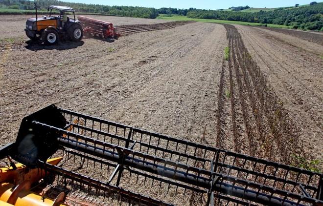 Insegurança trazida por conflitos civis impede que a agricultura ocorra normalmente e ameaça a segurança alimentar. | DIRCEU PORTUGAL/GAZETA DO POVO
