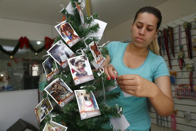Árvore de Natal solidária no pet shop Bicho Chic traz fotos de animais para adoção responsável da ONG Adote com  Consciência | Aniele Nascimento/Gazeta do Povo