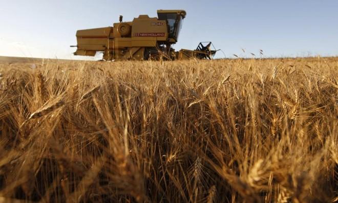 No cenário mais otimista, o potencial total de produção é de 22 milhões de toneladas de trigo. | JONATHAN CAMPOS/JONATHAN CAMPOS