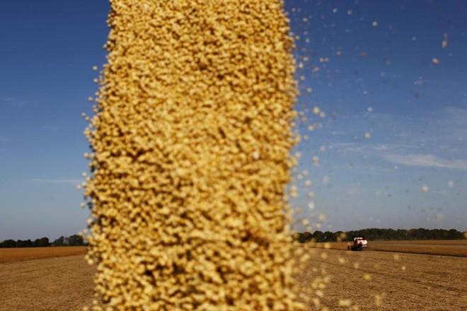 As estimativas vão de 1 milhão de toneladas até 6 milhões de toneladas.   Jonathan Campos/Gazeta do Povo