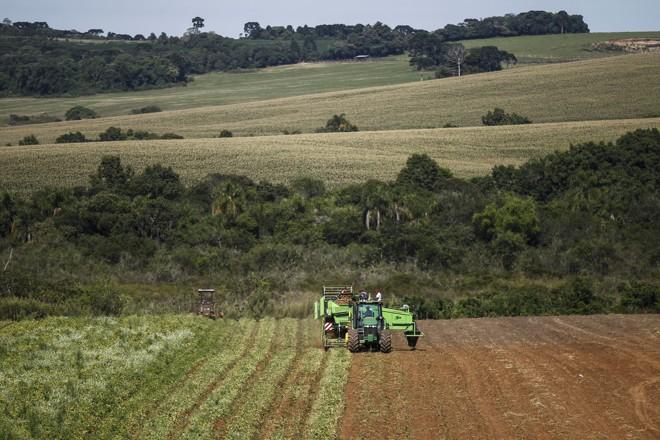 """Como as lavouras semeadas com batata necessitam de aproximadamente três anos de """"repouso"""" após a colheita, para evitar doenças, os Dzierwa trabalham com 400 hectares arrendados na região.   Jonathan Campos/Gazeta do Povo"""