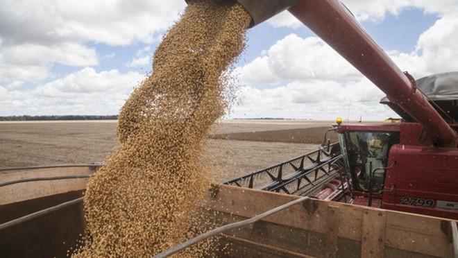 A C.Vale diz que a colheita recorde de soja na safra 2015/16 contribuiu para o bom resultado da organização no ano passado   Rodrigo Félix Leal/Gazeta doPovo